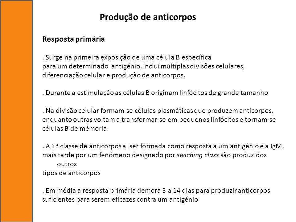 Produção de anticorpos Resposta primária. Surge na primeira exposição de uma célula B específica para um determinado antigénio, inclui múltiplas divis