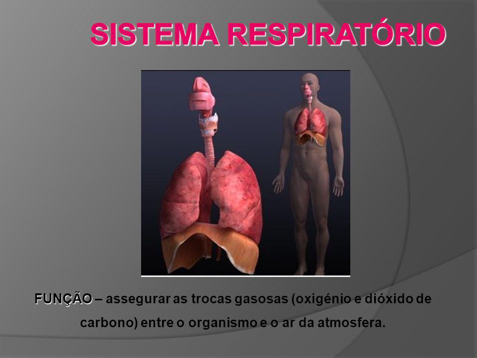 FUNÇÃO FUNÇÃO – assegurar as trocas gasosas (oxigénio e dióxido de carbono) entre o organismo e o ar da atmosfera.