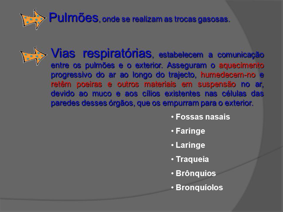 Pulmões, onde se realizam as trocas gasosas. Fossas nasais Faringe Laringe Traqueia Brônquios Bronquíolos Vias respiratórias, estabelecem a comunicaçã