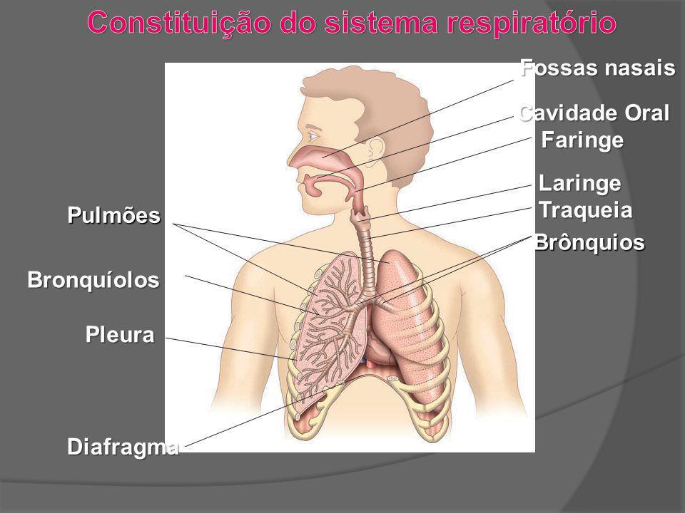 Fossas nasais Cavidade Oral Faringe Laringe Traqueia Brônquios Pulmões Pulmões Bronquíolos Bronquíolos Pleura Pleura Diafragma Diafragma