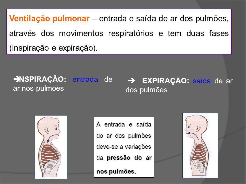 Ventilação pulmonar – entrada e saída de ar dos pulmões, através dos movimentos respiratórios e tem duas fases (inspiração e expiração). INSPIRAÇÃO: e