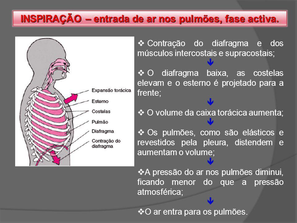 INSPIRAÇÃO – entrada de ar nos pulmões, fase activa. Contração do diafragma e dos músculos intercostais e supracostais; O diafragma baixa, as costelas