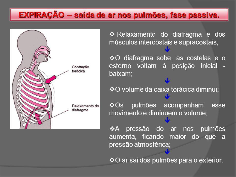 EXPIRAÇÃO – saída de ar nos pulmões, fase passiva. Relaxamento do diafragma e dos músculos intercostais e supracostais; O diafragma sobe, as costelas