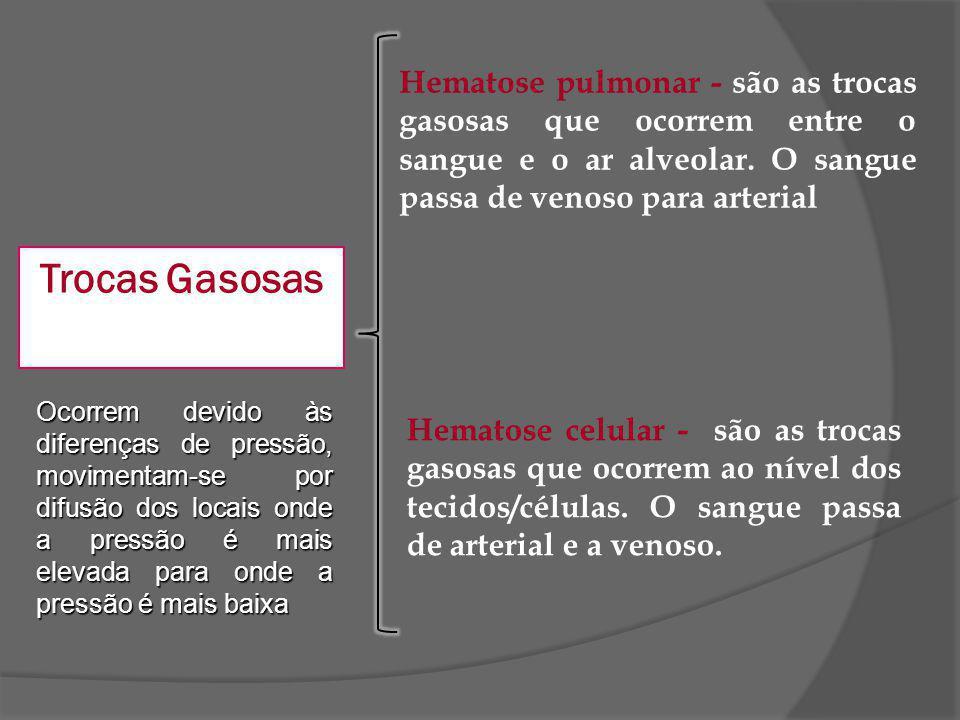 Trocas Gasosas Ocorrem devido às diferenças de pressão, movimentam-se por difusão dos locais onde a pressão é mais elevada para onde a pressão é mais