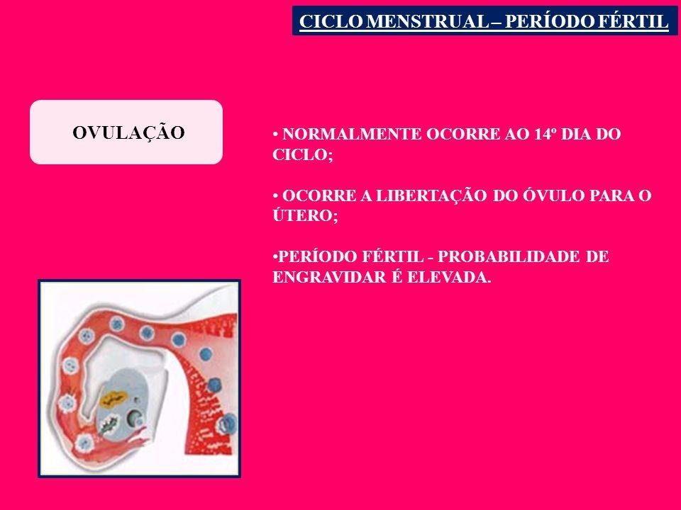 OVULAÇÃO CICLO MENSTRUAL – PERÍODO FÉRTIL NORMALMENTE OCORRE AO 14º DIA DO CICLO; OCORRE A LIBERTAÇÃO DO ÓVULO PARA O ÚTERO; PERÍODO FÉRTIL - PROBABILIDADE DE ENGRAVIDAR É ELEVADA.