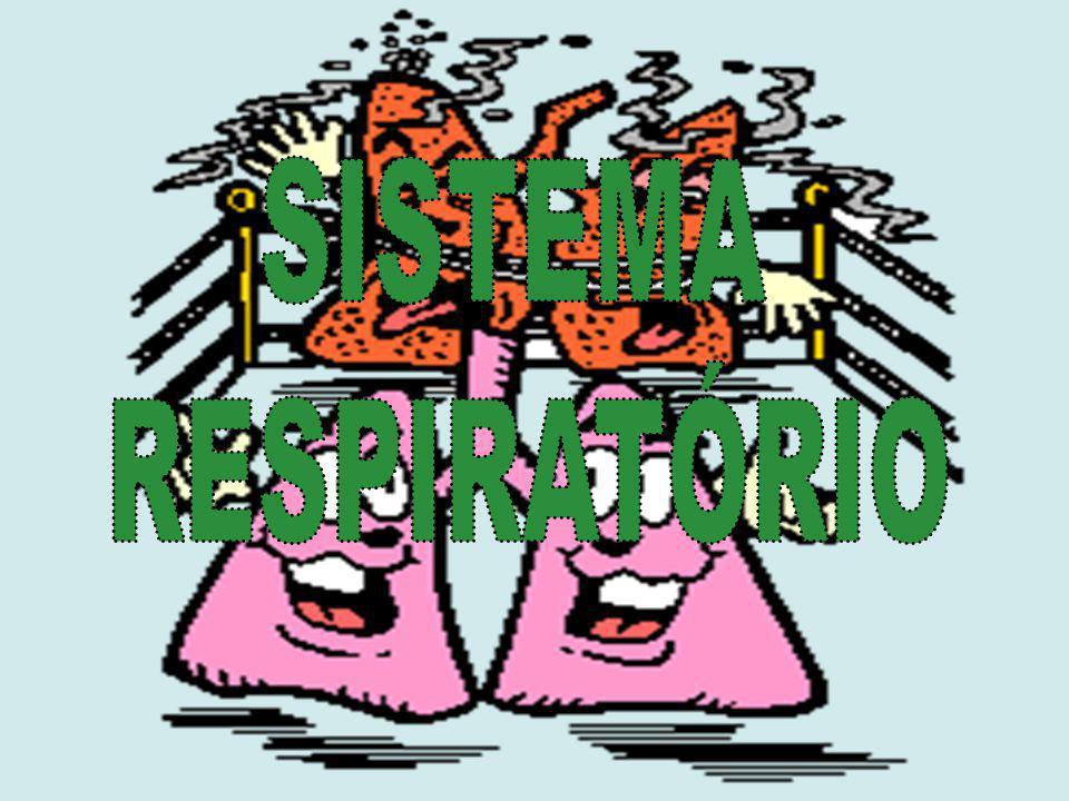 Ciências Naturais – 9º ano Sistema Respiratório Brônquios Resultam da bifurcação da traqueia; Constituídos por anéis de cartilagem completos; Revestidos por uma mucosa lubrificante e ciliada.