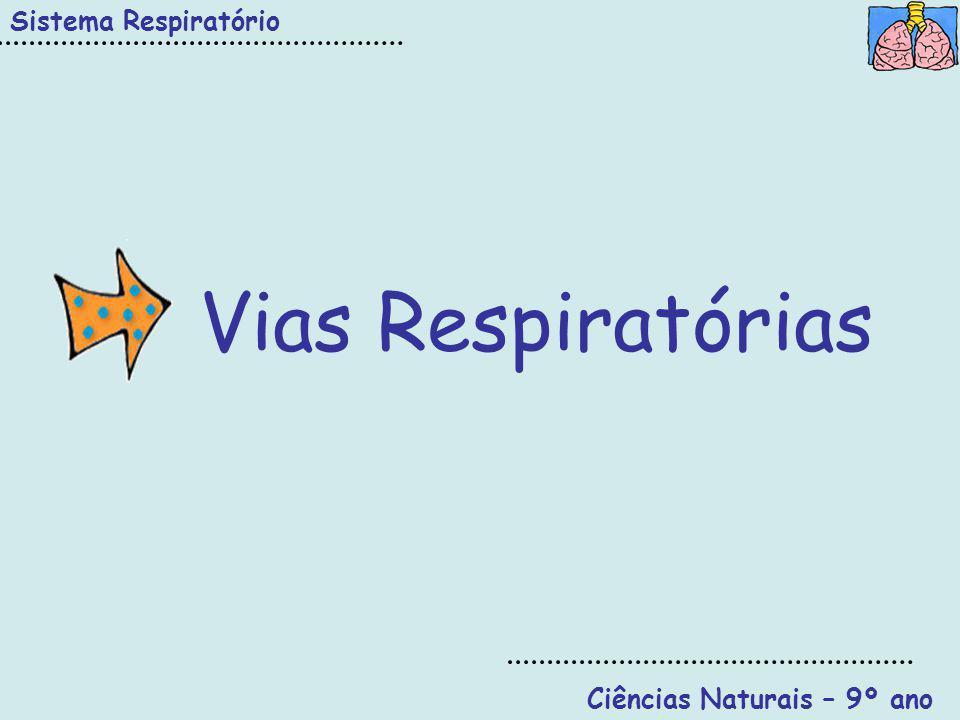 Sistema Respiratório Ciências Naturais – 9º ano DIFUSÃO A ventilação pulmonar é indispensável para a realização das trocas gasosas ao nível doa alvéolos pulmonares, uma vez que a deslocação dos gases se deve à diferença de pressão.