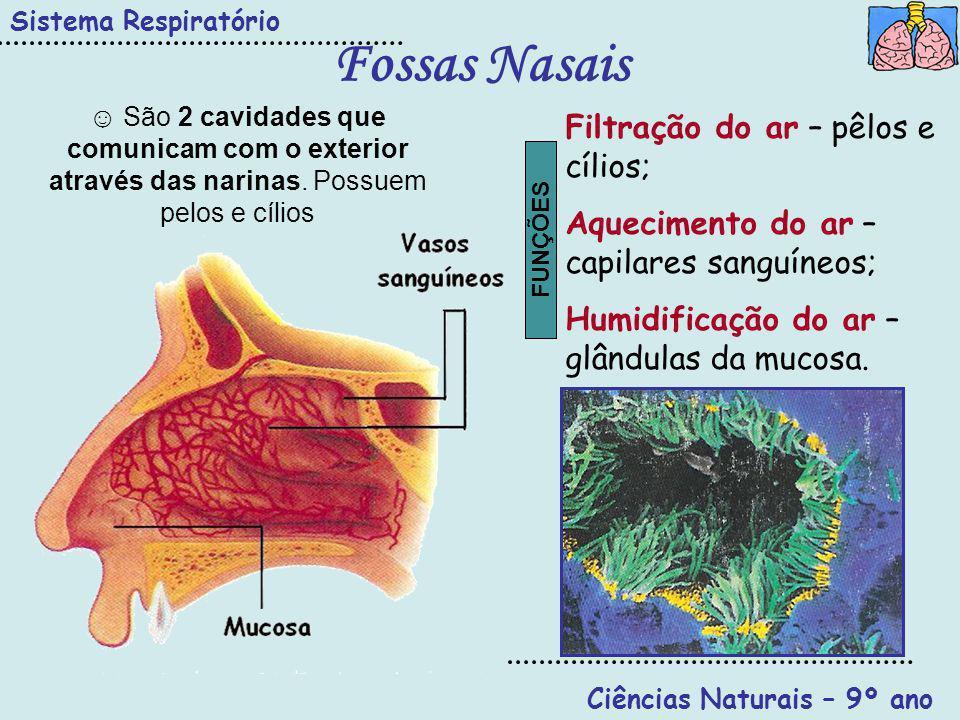 Ciências Naturais – 9º ano Sistema Respiratório Faringe Úvula Faringe Epiglote Boca Fossas nasais Esófago Permite a passagem do bolo alimentar (sistema digestivo); Permite a passagem do ar para a Laringe (sistema resp.); Dupla função controlada pela epiglote.