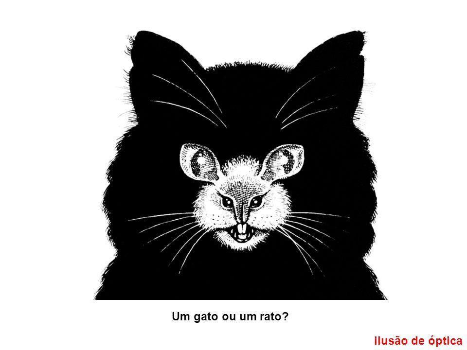 ilusão de óptica Um gato ou um rato?