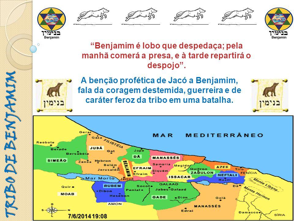TRIBO DE BENJAMIM 7/6/2014 19:097/6/2014 19:09 Benjamim é lobo que despedaça; pela manhã comerá a presa, e à tarde repartirá o despojo. A benção profé