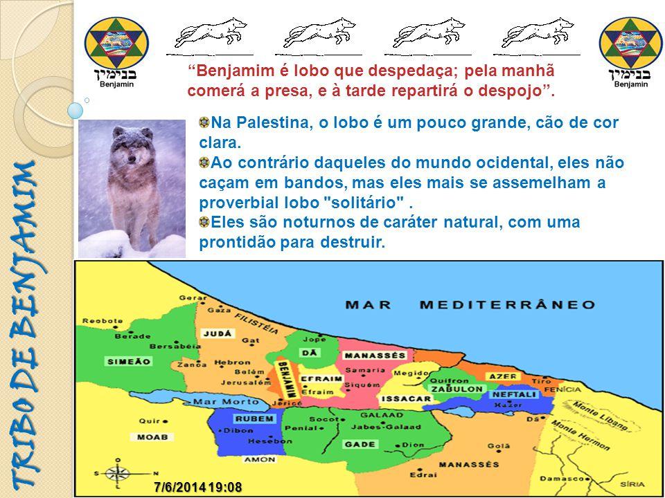 TRIBO DE BENJAMIM 7/6/2014 19:097/6/2014 19:09 Benjamim é lobo que despedaça; pela manhã comerá a presa, e à tarde repartirá o despojo. Na Palestina,