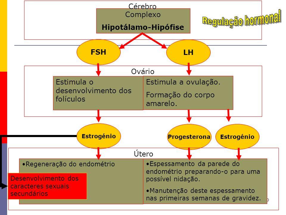 10 Estimula o desenvolvimento dos folículos Estimula a ovulação. Formação do corpo amarelo. Complexo Hipotálamo-Hipófise FSH LH Regeneração do endomét