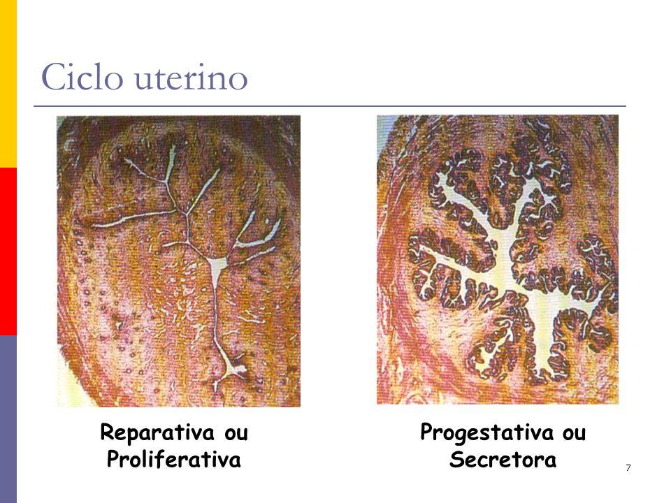 7 Reparativa ou Proliferativa Progestativa ou Secretora Ciclo uterino