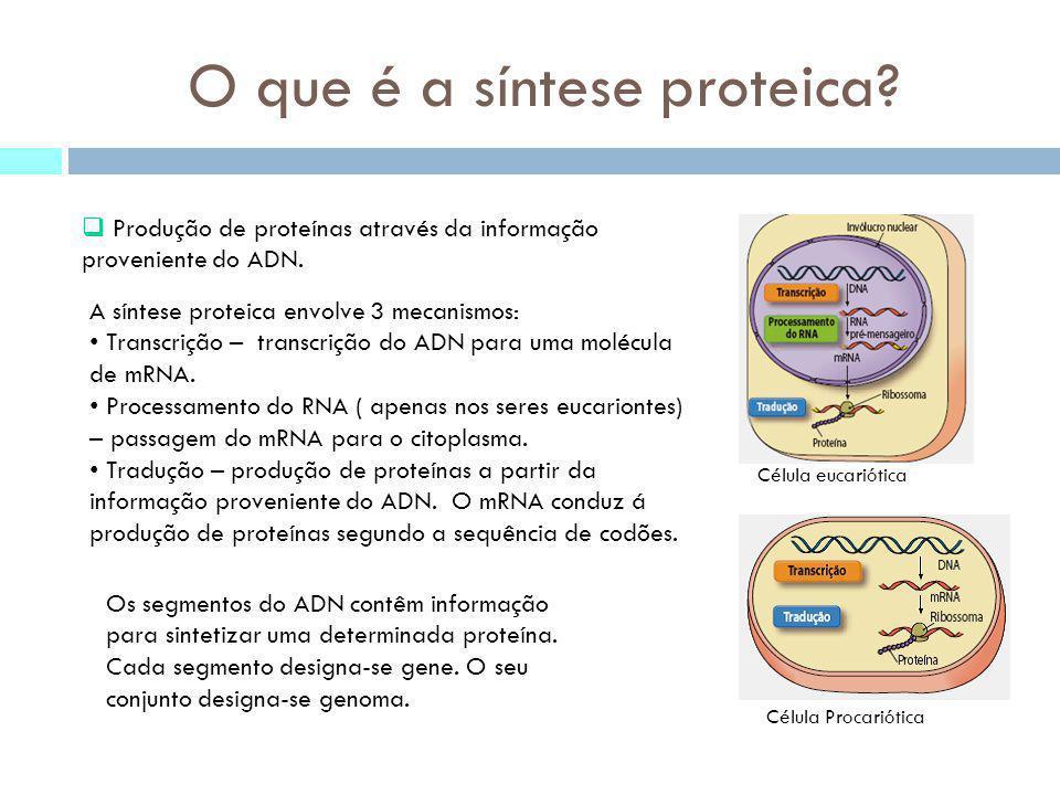 Código genético Características do código genético: cada aminoácido é codificado por um codão; o codão de iniciação(AUG) é utilizado na síntese proteica e codifica o aminoácido metionina; Codões de finalização (UAA, UGA e UAG) responsáveis pelo fim da sintese do péptido; É redundante/degenerescência Os dois primeiros nucleótidos do codão são mais específicos do que o terceiro.