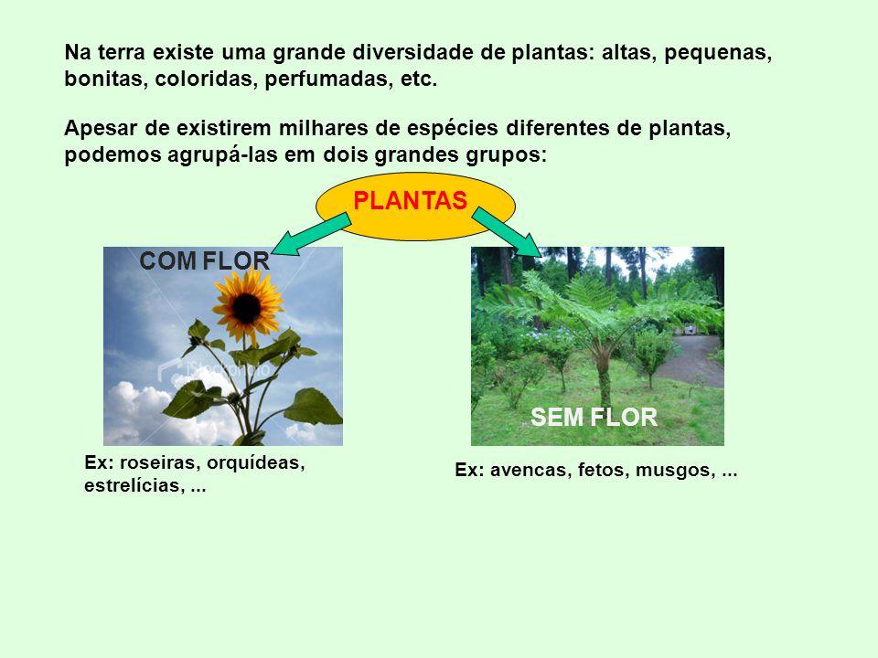 Na terra existe uma grande diversidade de plantas: altas, pequenas, bonitas, coloridas, perfumadas, etc.