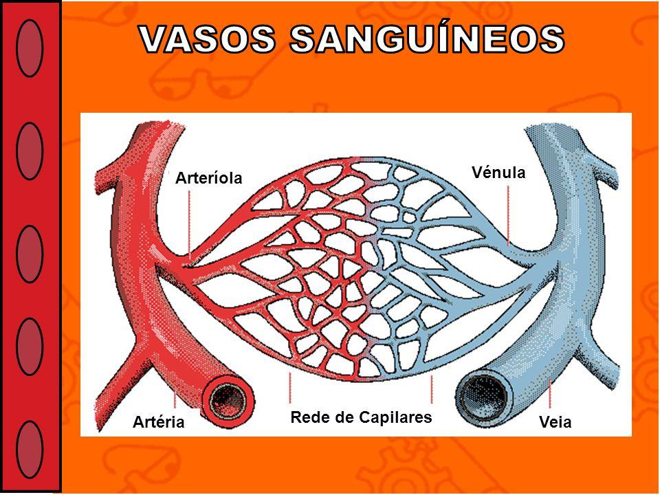 Veia Rede de Capilares Vénula Arteríola Artéria