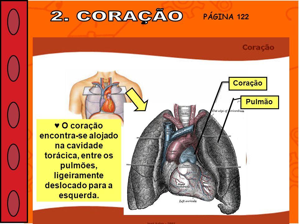 O coração encontra-se alojado na cavidade torácica, entre os pulmões, ligeiramente deslocado para a esquerda. PÁGINA 122 Coração Pulmão