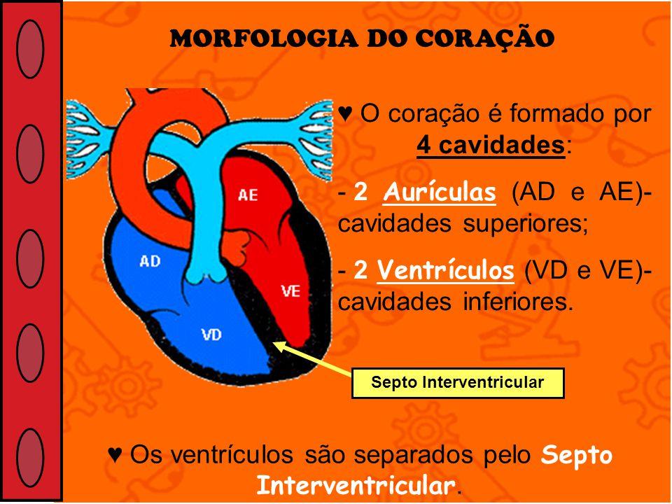 MORFOLOGIA DO CORAÇÃO O coração é formado por 4 cavidades: - 2 Aurículas (AD e AE)- cavidades superiores; - 2 Ventrículos (VD e VE)- cavidades inferio