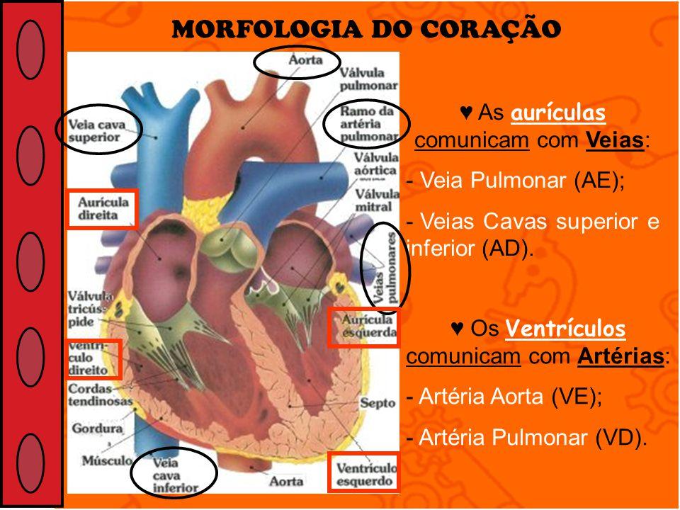MORFOLOGIA DO CORAÇÃO As aurículas comunicam com Veias: - Veia Pulmonar (AE); - Veias Cavas superior e inferior (AD). Os Ventrículos comunicam com Art