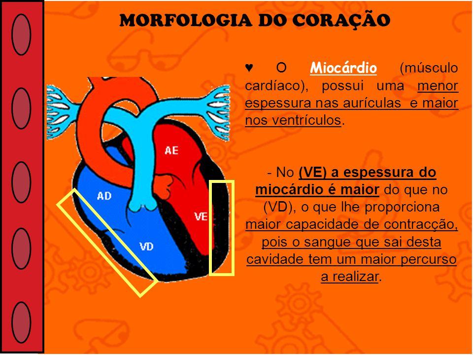 MORFOLOGIA DO CORAÇÃO O Miocárdio (músculo cardíaco), possui uma menor espessura nas aurículas e maior nos ventrículos. - No (VE) a espessura do miocá