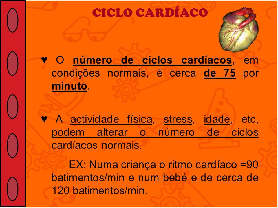 CICLO CARDÍACO O número de ciclos cardíacos, em condições normais, é cerca de 75 por minuto. A actividade física, stress, idade, etc, podem alterar o
