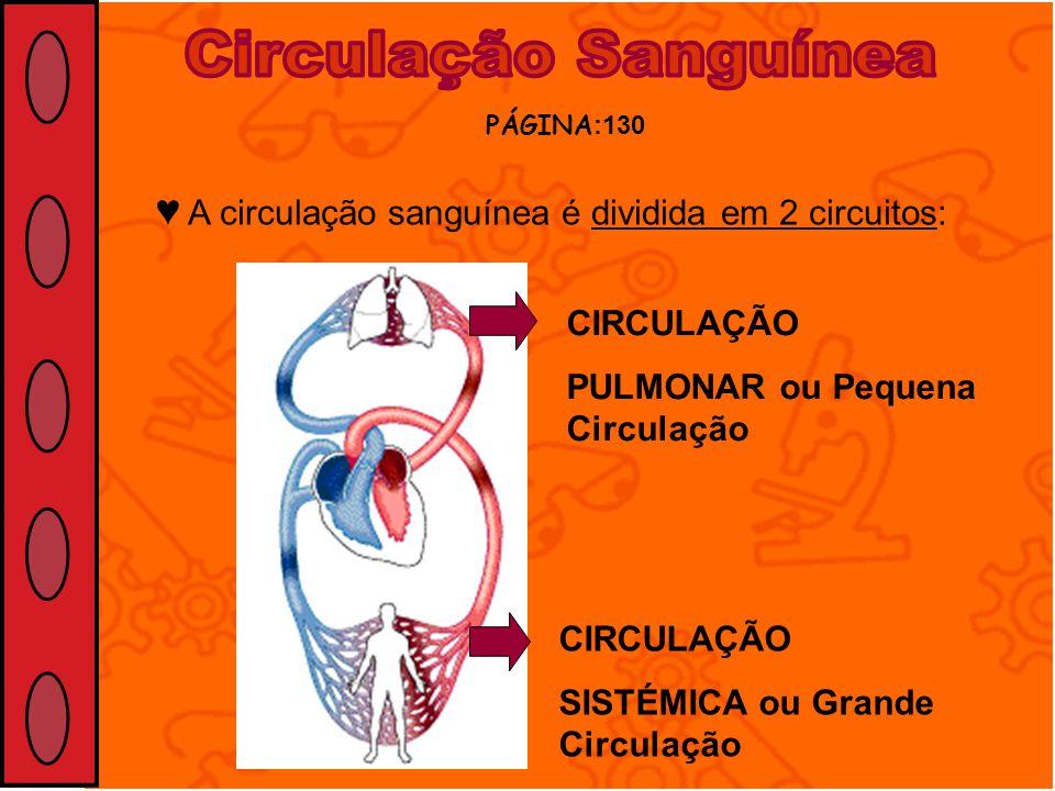 A circulação sanguínea é dividida em 2 circuitos: PÁGINA :130 CIRCULAÇÃO PULMONAR ou Pequena Circulação CIRCULAÇÃO SISTÉMICA ou Grande Circulação