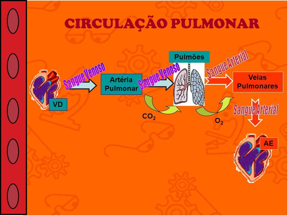 CIRCULAÇÃO PULMONAR VD Artéria Pulmonar Veias Pulmonares Pulmões AE O2O2 CO 2