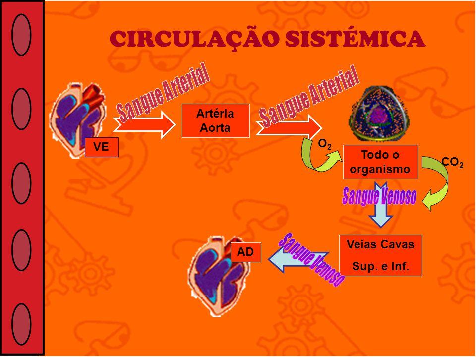 CIRCULAÇÃO SISTÉMICA VE Artéria Aorta Veias Cavas Sup. e Inf. AD Todo o organismo O2O2 CO 2