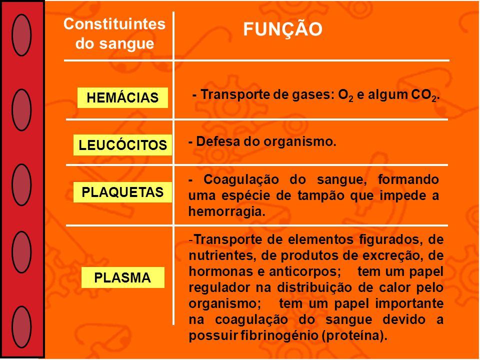 Constituintes do sangue FUNÇÃO HEMÁCIAS LEUCÓCITOS PLAQUETAS PLASMA - Transporte de gases: O 2 e algum CO 2. - Defesa do organismo. - Coagulação do sa