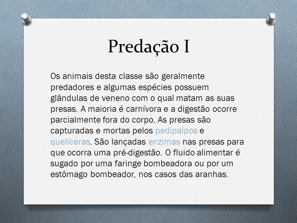 Predação I Os animais desta classe são geralmente predadores e algumas espécies possuem glândulas de veneno com o qual matam as suas presas.