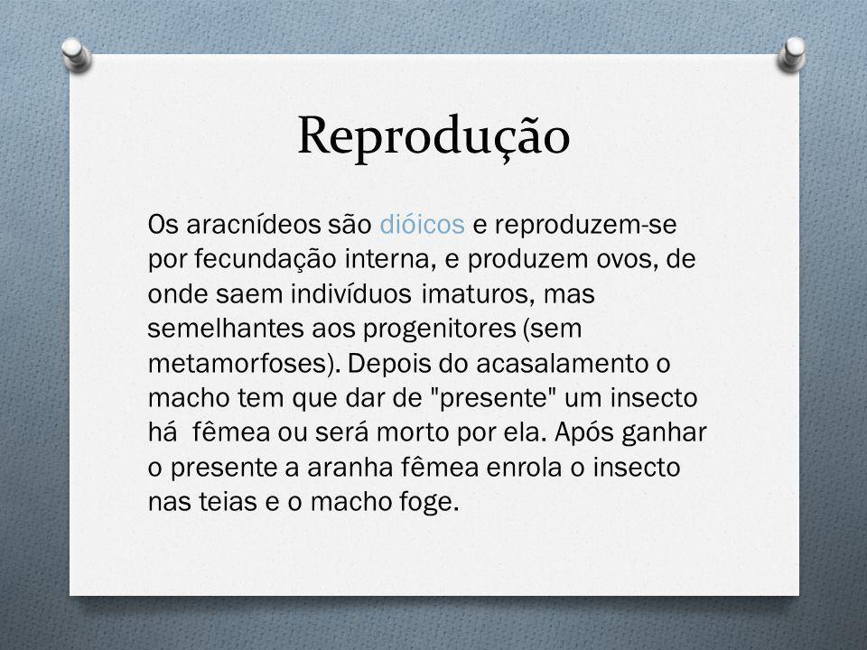Reprodução Os aracnídeos são dióicos e reproduzem-se por fecundação interna, e produzem ovos, de onde saem indivíduos imaturos, mas semelhantes aos progenitores (sem metamorfoses).