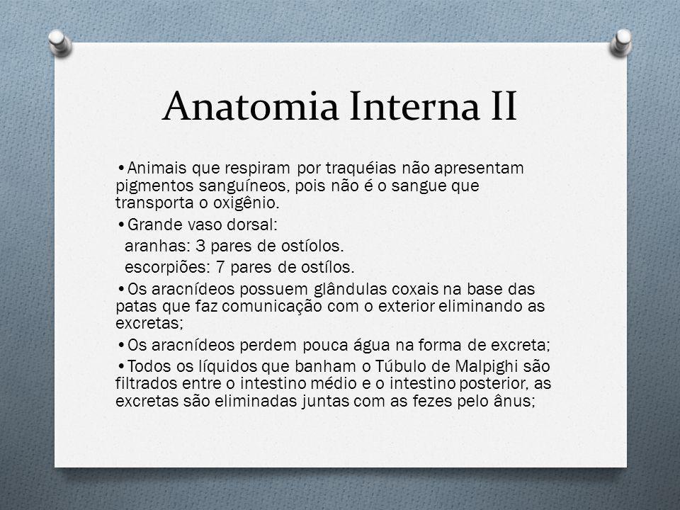 Anatomia Interna II Animais que respiram por traquéias não apresentam pigmentos sanguíneos, pois não é o sangue que transporta o oxigênio.