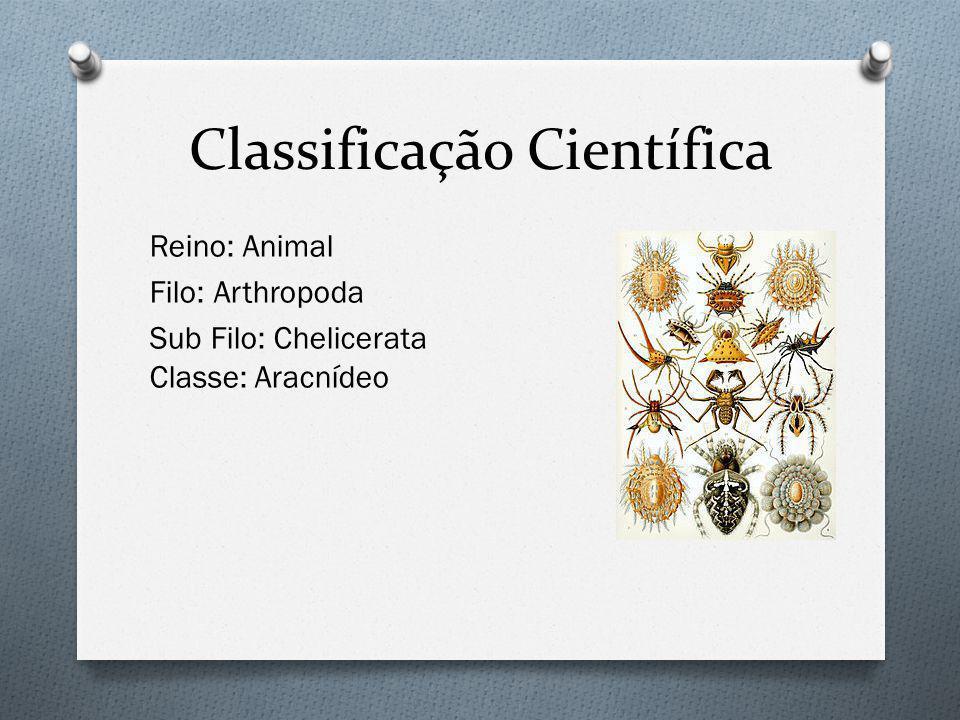 Classificação Científica Reino: Animal Filo: Arthropoda Sub Filo: Chelicerata Classe: Aracnídeo