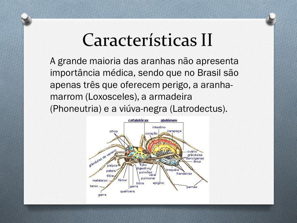 Características II A grande maioria das aranhas não apresenta importância médica, sendo que no Brasil são apenas três que oferecem perigo, a aranha- marrom (Loxosceles), a armadeira (Phoneutria) e a viúva-negra (Latrodectus).