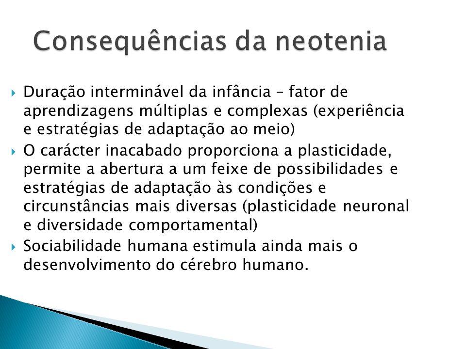 Consequências da neotenia Duração interminável da infância – fator de aprendizagens múltiplas e complexas (experiência e estratégias de adaptação ao m