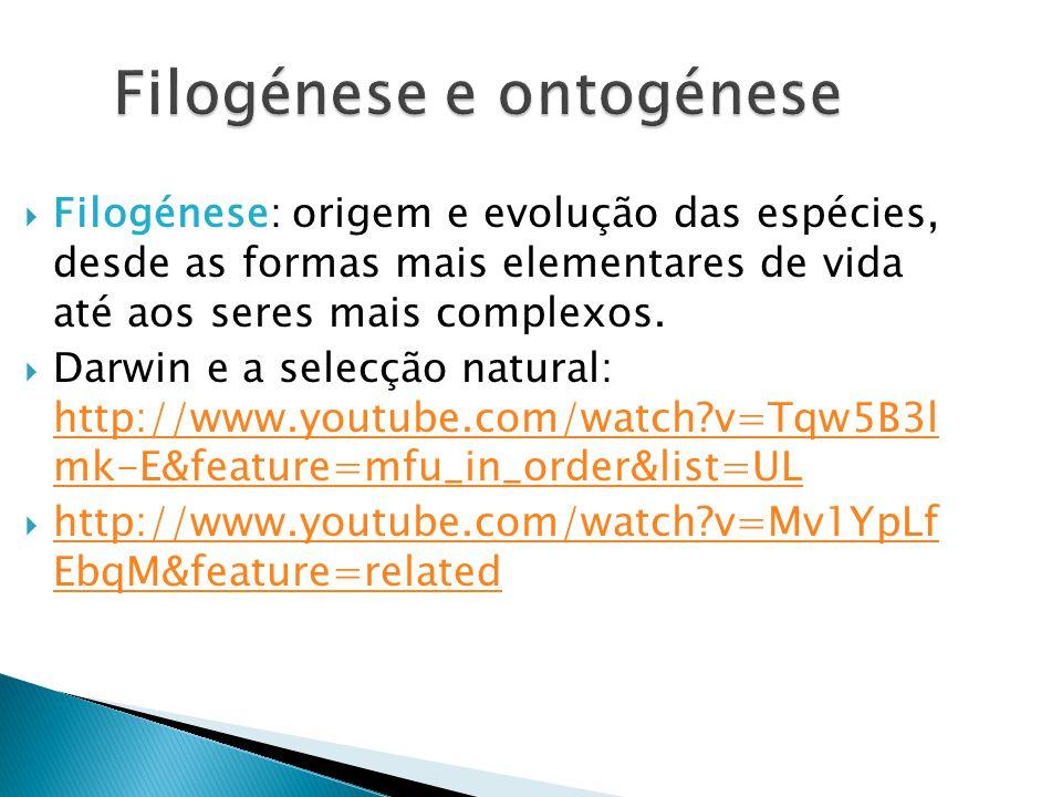 Filogénese e ontogénese Filogénese: origem e evolução das espécies, desde as formas mais elementares de vida até aos seres mais complexos.