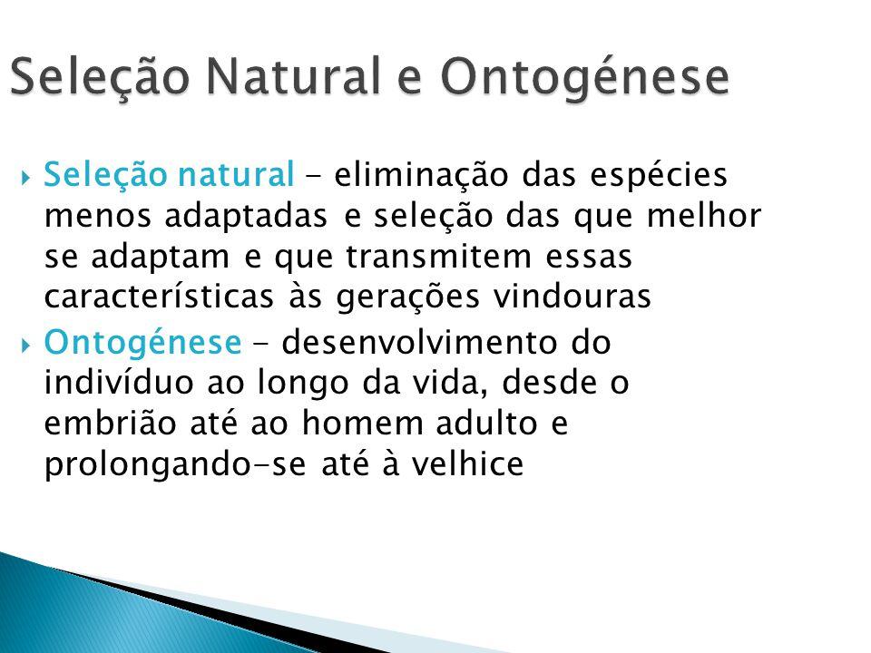 Seleção Natural e Ontogénese Seleção natural - eliminação das espécies menos adaptadas e seleção das que melhor se adaptam e que transmitem essas cara