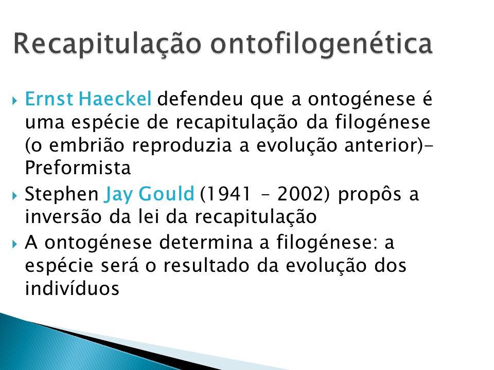 Recapitulação ontofilogenética Ernst Haeckel defendeu que a ontogénese é uma espécie de recapitulação da filogénese (o embrião reproduzia a evolução anterior)- Preformista Stephen Jay Gould (1941 – 2002) propôs a inversão da lei da recapitulação A ontogénese determina a filogénese: a espécie será o resultado da evolução dos indivíduos