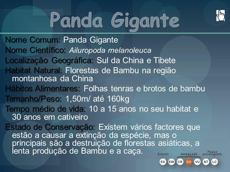 Nome Comum: Nome Comum: Panda Gigante Nome Científico: Nome Científico: Ailuropoda melanoleuca Localização Geográfica: Localização Geográfica: Sul da