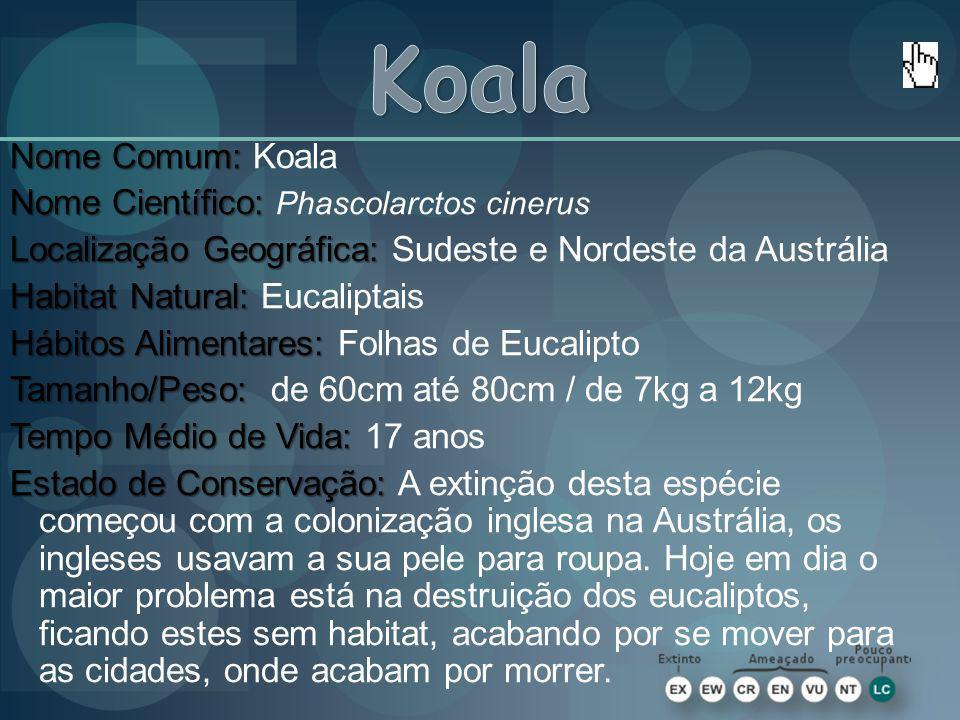 Nome Comum: Nome Comum: Koala Nome Científico: Nome Científico: Phascolarctos cinerus Localização Geográfica: Localização Geográfica: Sudeste e Nordes