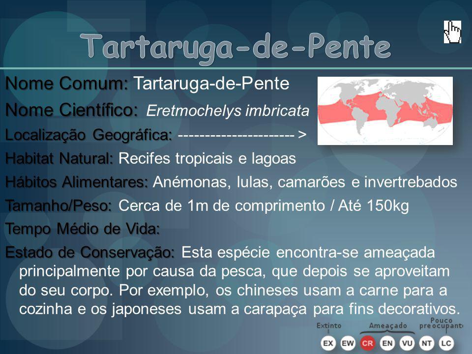 Nome Comum: Nome Comum: Tartaruga-de-Pente Nome Científico: Nome Científico: Eretmochelys imbricata Localização Geográfica: Localização Geográfica: --