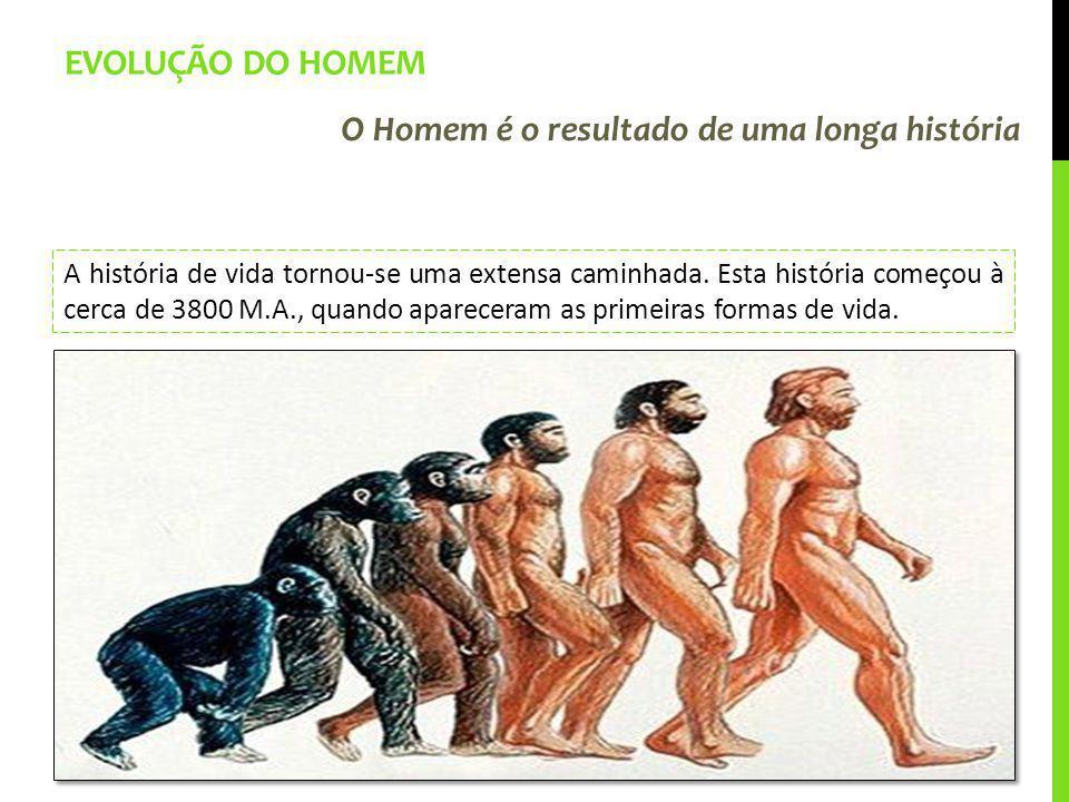 EVOLUÇÃO DO HOMEM O Homem é o resultado de uma longa história A história de vida tornou-se uma extensa caminhada. Esta história começou à cerca de 380