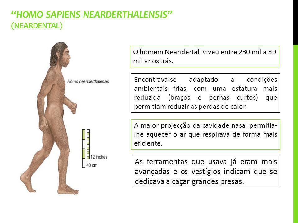HOMO SAPIENS NEARDERTHALENSIS (NEARDENTAL) As ferramentas que usava já eram mais avançadas e os vestígios indicam que se dedicava a caçar grandes pres