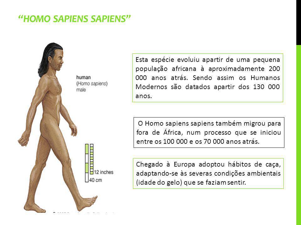 HOMO SAPIENS SAPIENS Chegado à Europa adoptou hábitos de caça, adaptando-se às severas condições ambientais (idade do gelo) que se faziam sentir. Esta