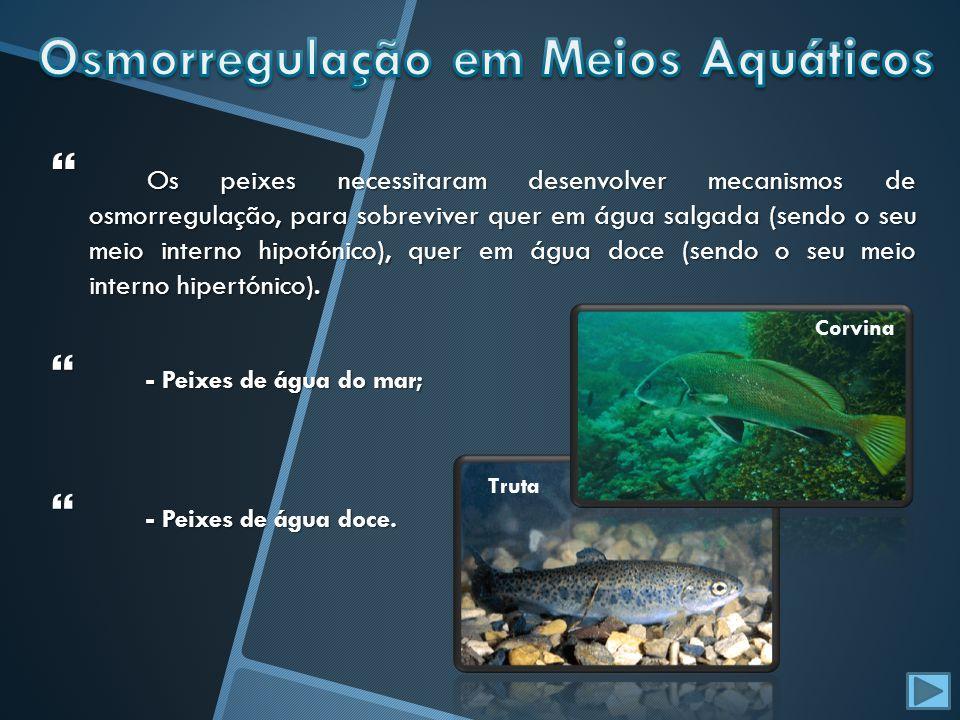Os peixes necessitaram desenvolver mecanismos de osmorregulação, para sobreviver quer em água salgada (sendo o seu meio interno hipotónico), quer em á