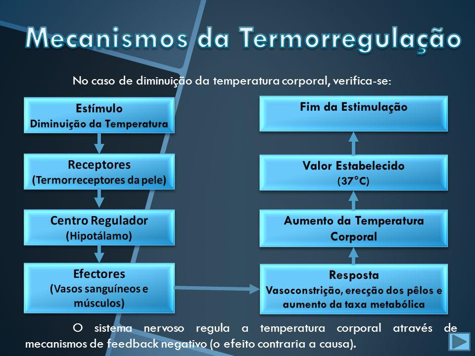 No caso de diminuição da temperatura corporal, verifica-se: O sistema nervoso regula a temperatura corporal através de mecanismos de feedback negativo