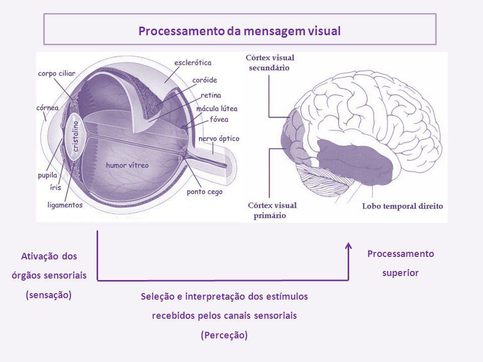 Ativação dos órgãos sensoriais (sensação) Seleção e interpretação dos estímulos recebidos pelos canais sensoriais (Perceção) Processamento superior Pr