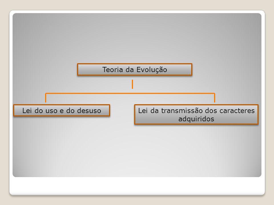 Teoria da Evolução Lei do uso e do desuso Lei da transmissão dos caracteres adquiridos Lei da transmissão dos caracteres adquiridos