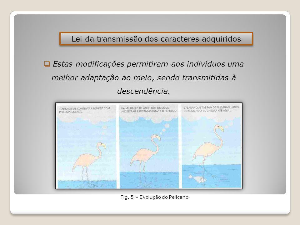 Lei da transmissão dos caracteres adquiridos Estas modificações permitiram aos indivíduos uma melhor adaptação ao meio, sendo transmitidas à descendência.