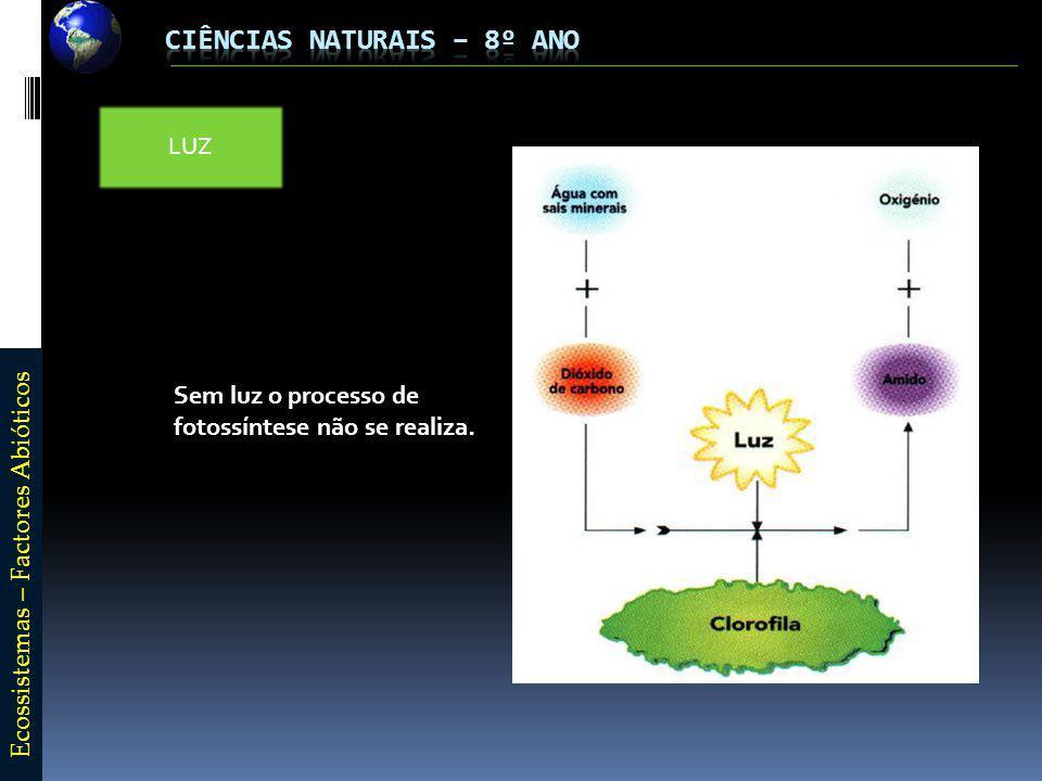 E c o s s i s t e m a s – F a c t o r e s A b i ó t i c o s LUZ Sem luz o processo de fotossíntese não se realiza.